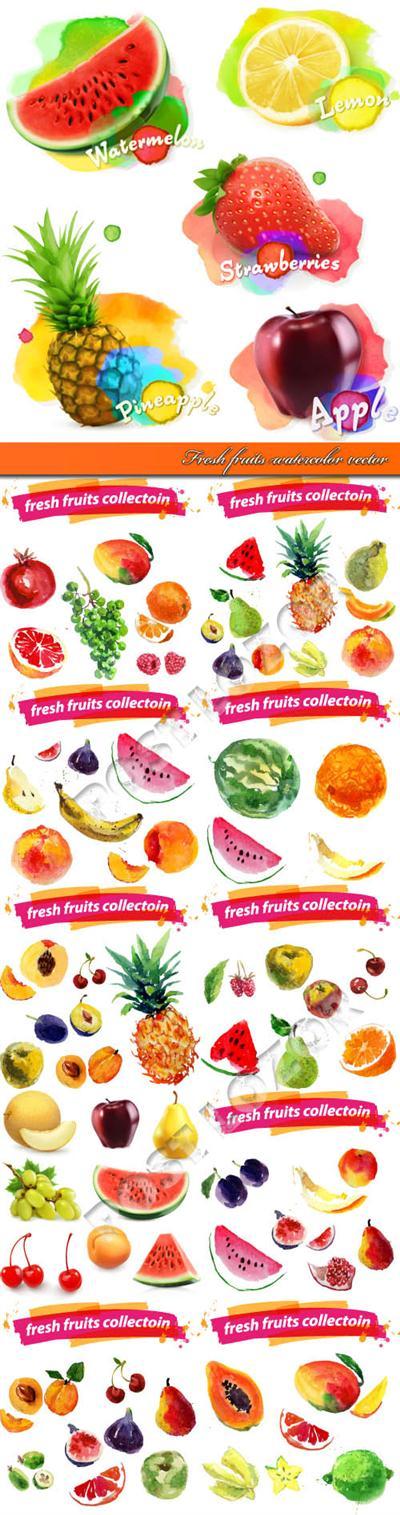 Fresh fruits watercolor vector