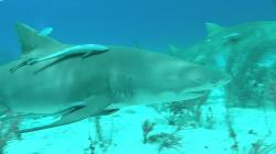 Акулы: Властелины подводного мира (2013) BDRip AVC