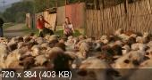 ������� ������ / Legaturi bolnavicioase (2006) DVDRip   DVO   Sub